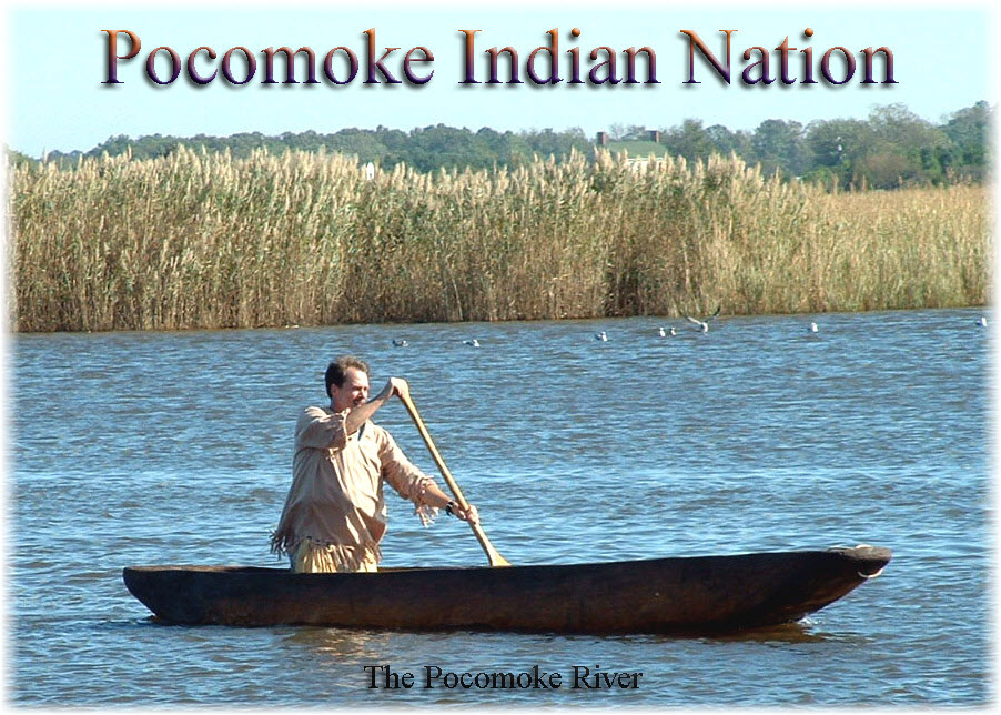 The Great Pocomoke River